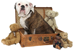 Boxer-Wholesale-Pet-Food-and-Supplies-in-Mississauga-by-Happy-Pet-Products