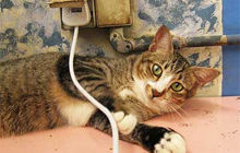 Cat Electrical Cords